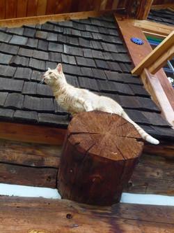 cat 108