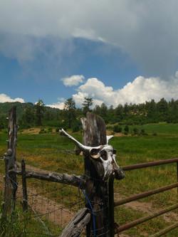 Skull on Fence