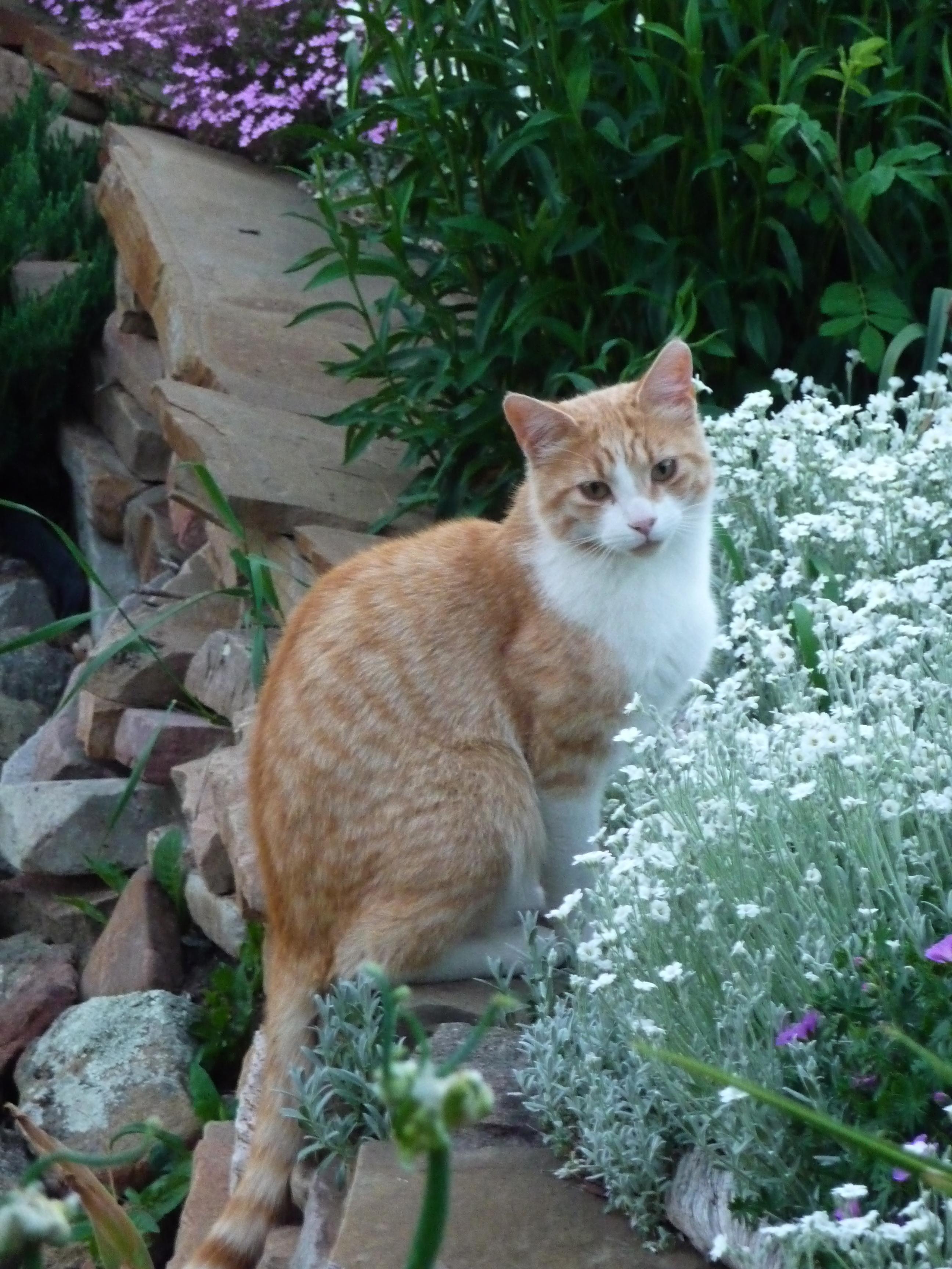 kitty in flowers