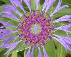 Mandala Pinwheel