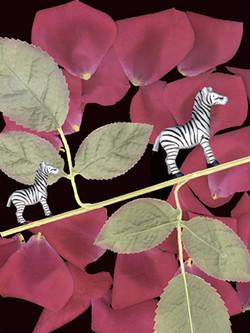Balancing Zebras