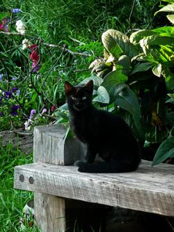cat 113