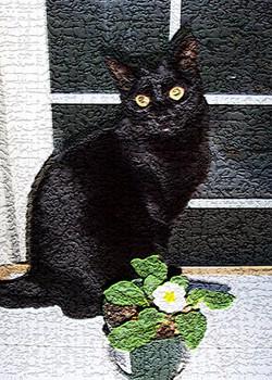 cat 101