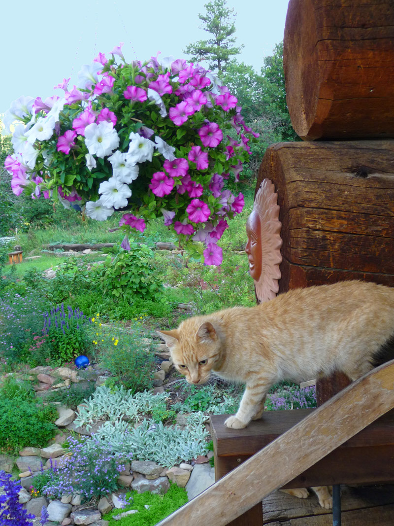 cat 109