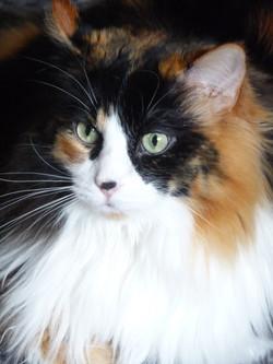 cat 112