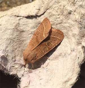 Marvellous Moths for March