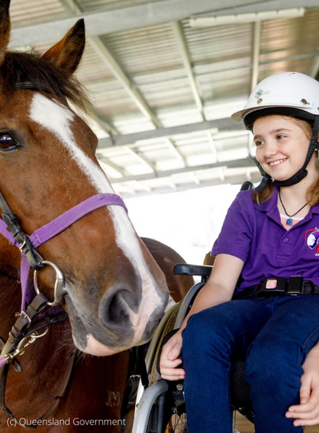 RDA search for new horses