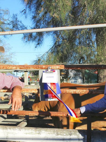 Champion Steer donation