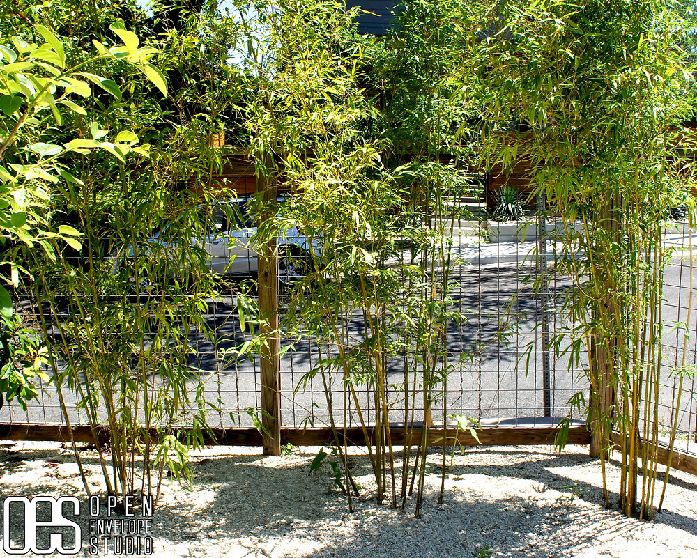 OES | Waltrip Residence - Clumping bamboo in modern landscape design build