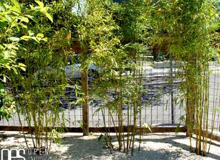 Clumping vs Running Bamboo