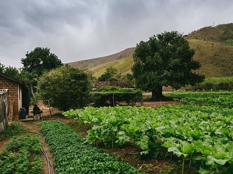 Da impenhorabilidade da pequena propriedade rural