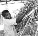 Ganesha Grassroots Organic Farms