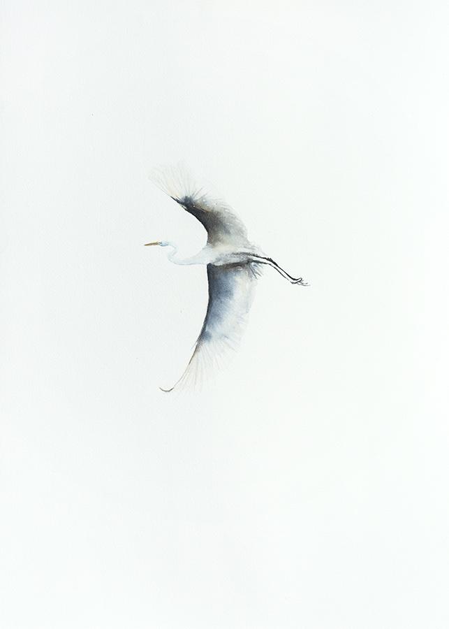 Egret II