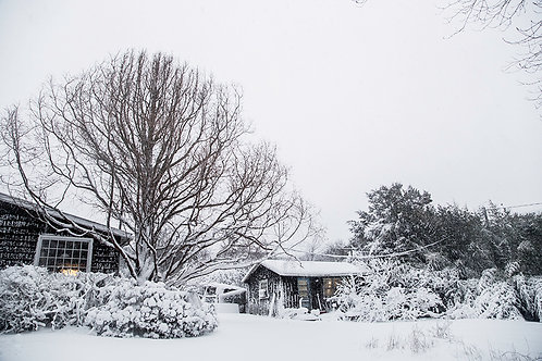 Winter Redwood