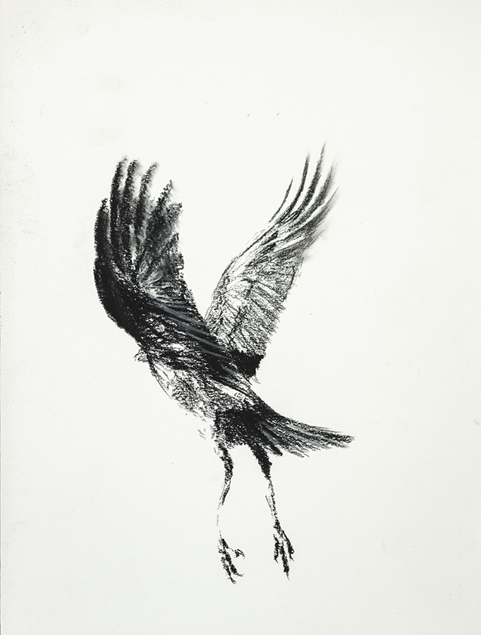 Study of a Crow 2
