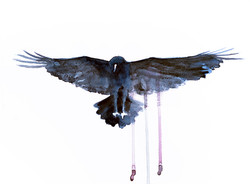 Dripping Crow