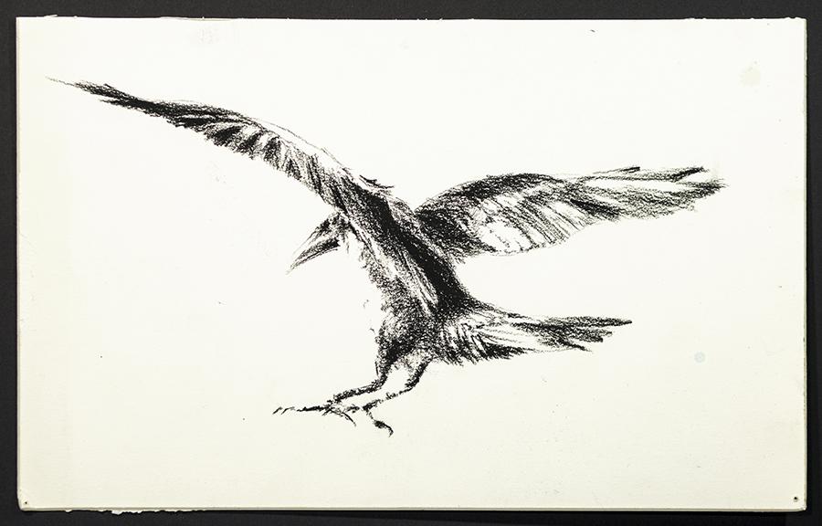 Study of a Crow 1