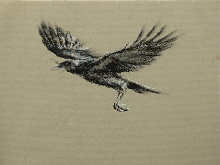 Study of a Crow 4