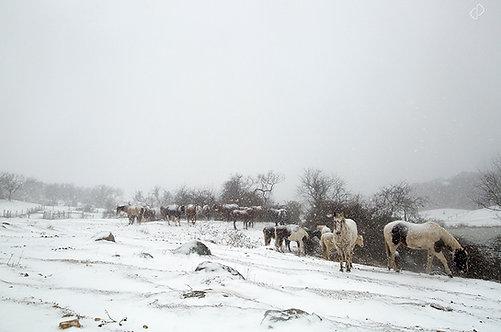 Drifts & Horses
