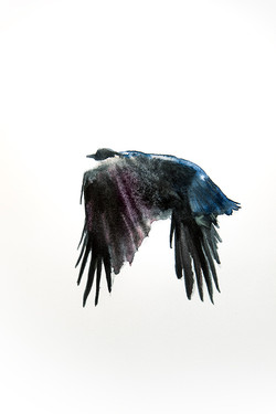 Crow Sketch 2