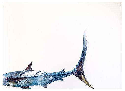 Blue Shark Tale of Woe