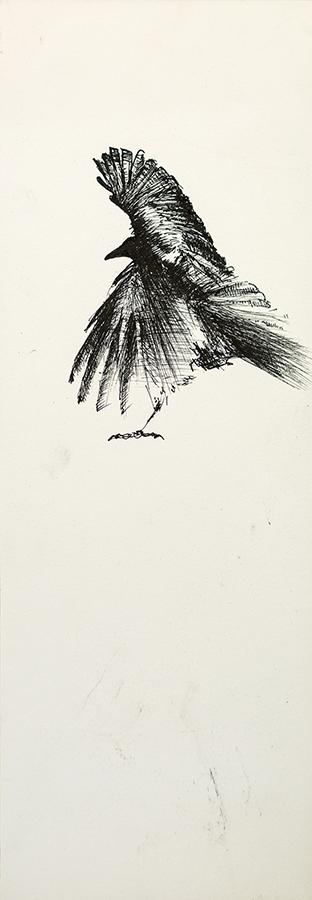 Study of a Crow 6