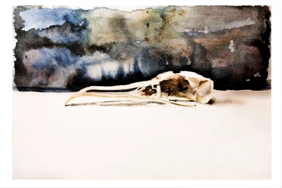 Seagull skull