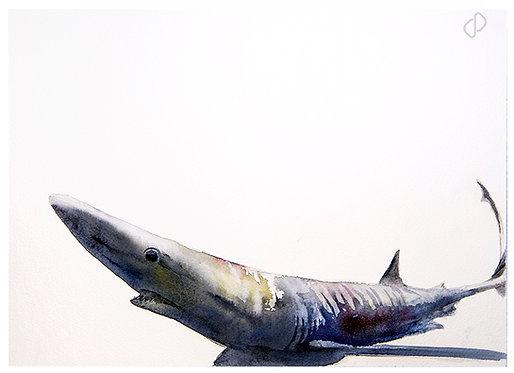 Blue Shark I