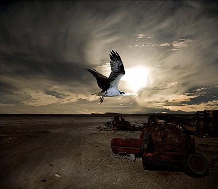 Winter Gull