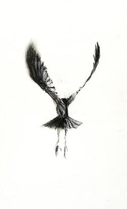 Study of a Crow 3