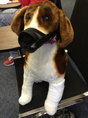 Pet First Aid 1