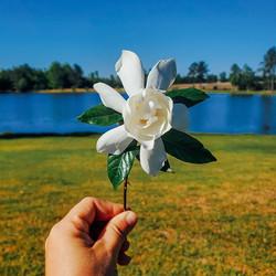 #garden #gardenia #water #lake 🌿 I've a