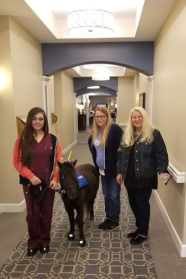 Therapy Horse inside an Assited living facility