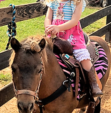 child sitting on a pony