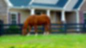 Horse grazing in paddock