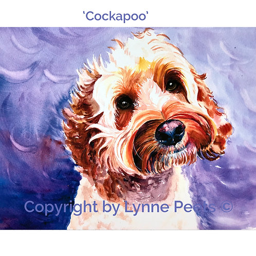Cockapoo - dog portraits - Lynne Peets