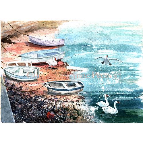 Brixham Harbour Swans - Lynne Peets