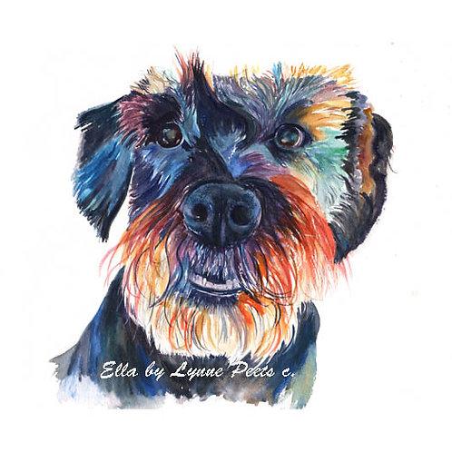 Lynne Peets Brixham Artist - 'Ella' sample of pet portrait in watercolour