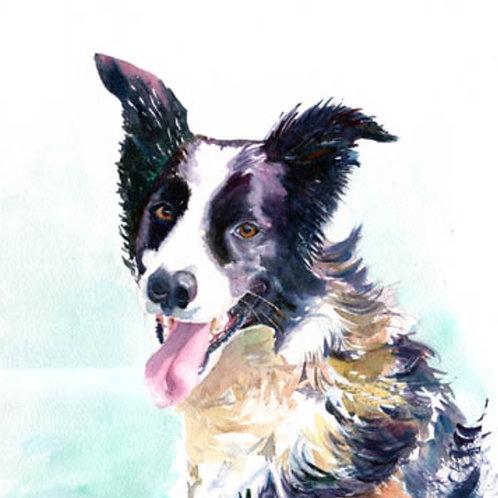 'Collie' example of Pet Portrait