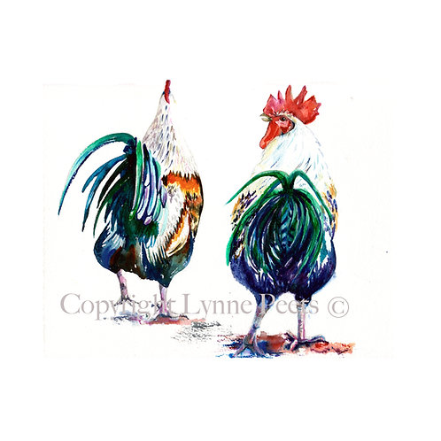 Lynne Peets - humorous Cockerels - Chickens - watercolour
