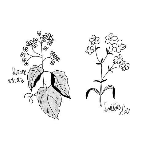 Floraison •2