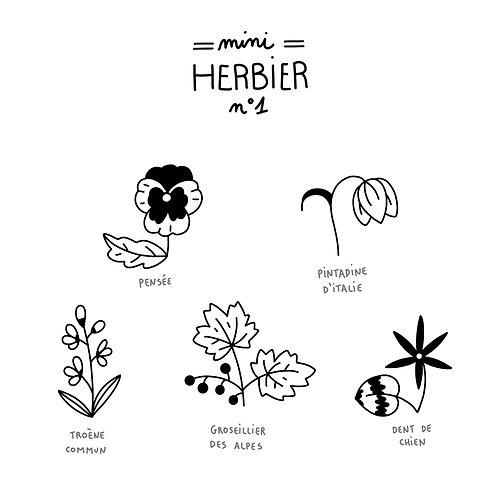 Mini herbier 1