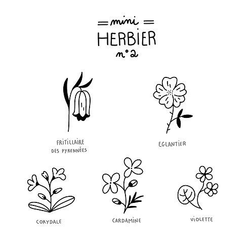 Mini herbier2
