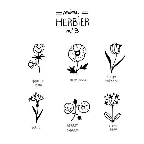 Mini herbier 3