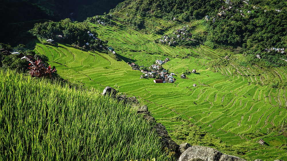 Batad Village from view point