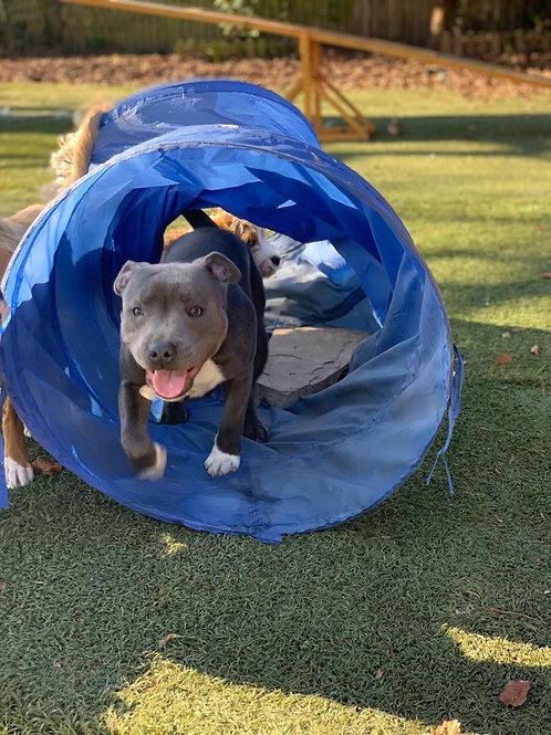 Platinum Dog Training Plan