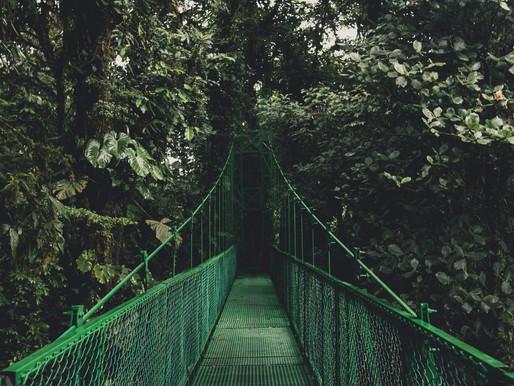 Un día en Monteverde