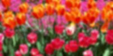 Flower-meadow-spring-22177541-1920-1363.