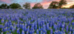 Bluebonnets-at-Sunset-in-San-Saba-2.jpg