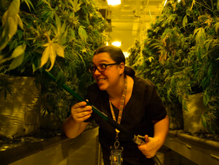 Pot delivery one possibility as Colorado prepares for a year of change in marijuana industry